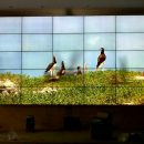 5x5 videowall bracket tv